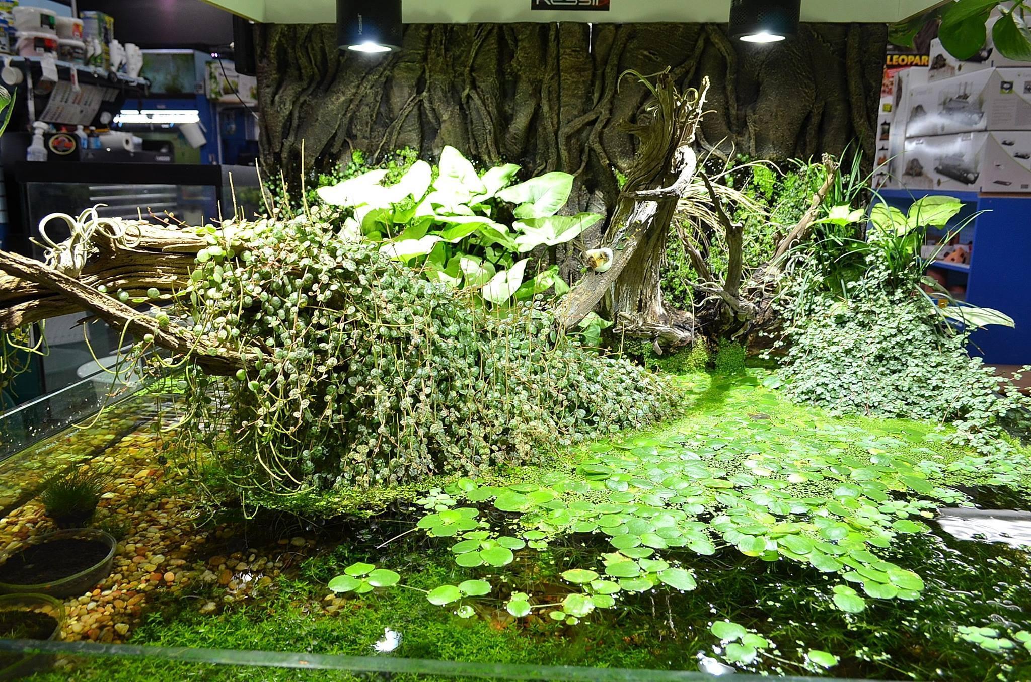 tailsnteeth-aquascape-our-first-nature-aquarium-now
