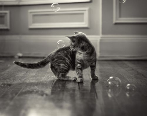 Playful kitty catnip bubble